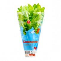 Конусный пакет для свежей зелени, 25мкм
