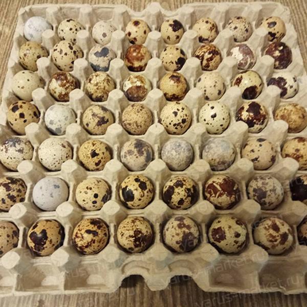 """Бугорчатая прокладка для 56 перепелиных яиц. Купить бугорчатую прокладку для яиц оптом в магазине """"ЯрусМаркет"""""""