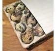 Коробка для 20 перепелиных яиц, картонная, 116х112 мм.