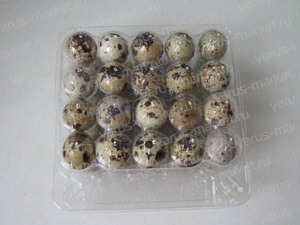 Контейнер для 20 перепелиных яиц пластиковый. Купить упаковку для перепелиных яиц оптом дешево на сайте yarus–market.ru